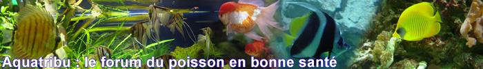 aquatribu le forum du poisson en bonne santé